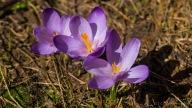 Kommt der Frühling hier auch langsam?
