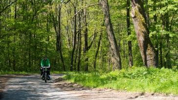 wenig Verkehr, schöne Straßen, gesunder Wald, keine Kettensägen. Gefällt uns.