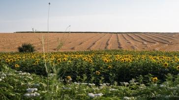 deutlich mehr Landwirtschaft - Nordbulgarien