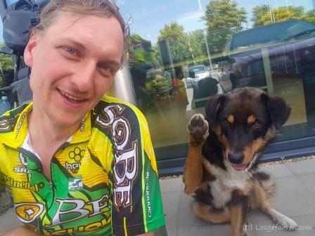 Mit den Straßenhunden kommen wir inzwischen ganz gut klar - Bulgarien