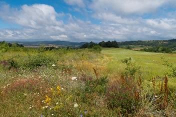 Blühende Wiesen auf dem Weg nach Burgas, Bulgarien