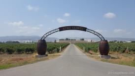 Ja - Aserbaidschan ist auch Weinanbauland. An der Sonne mangelt es schonmal nicht.