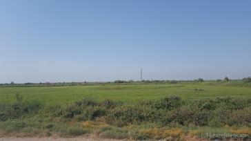 Landschaften - mitten im Nichts steht plötzlich Schilf. Künstliche Bewässerungsnetze durchstreifen das Land