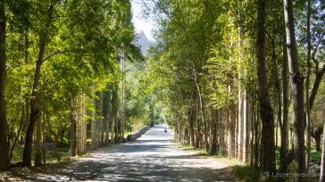 Auf den letzten Kilometern nach Khorog - und plötzlich wird es grün!