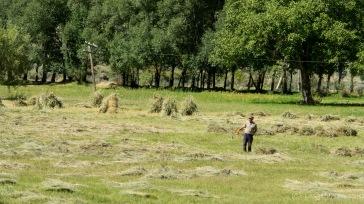 Ratterten in Rumänien noch überall die Motorsensen, wird hier alles mit der Handsichel gemäht.