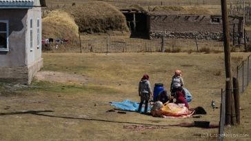 Eine Kuh wird geschlachtet, Sary Tash