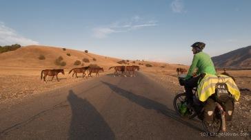 Pferdeherdenstraßenquerung - gequert wird immer erst, wenn einer kommt, sonst ist das langweilig